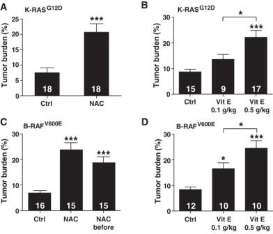 Antioxidants NAC and vitamin E increase tumor growth in mice with genetic lung cancer